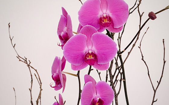 McEwan Orchids