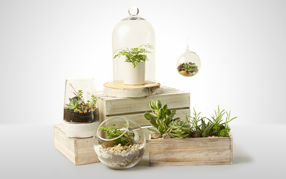 McEwan Terrariums, hanging plant orbs and succulent planters